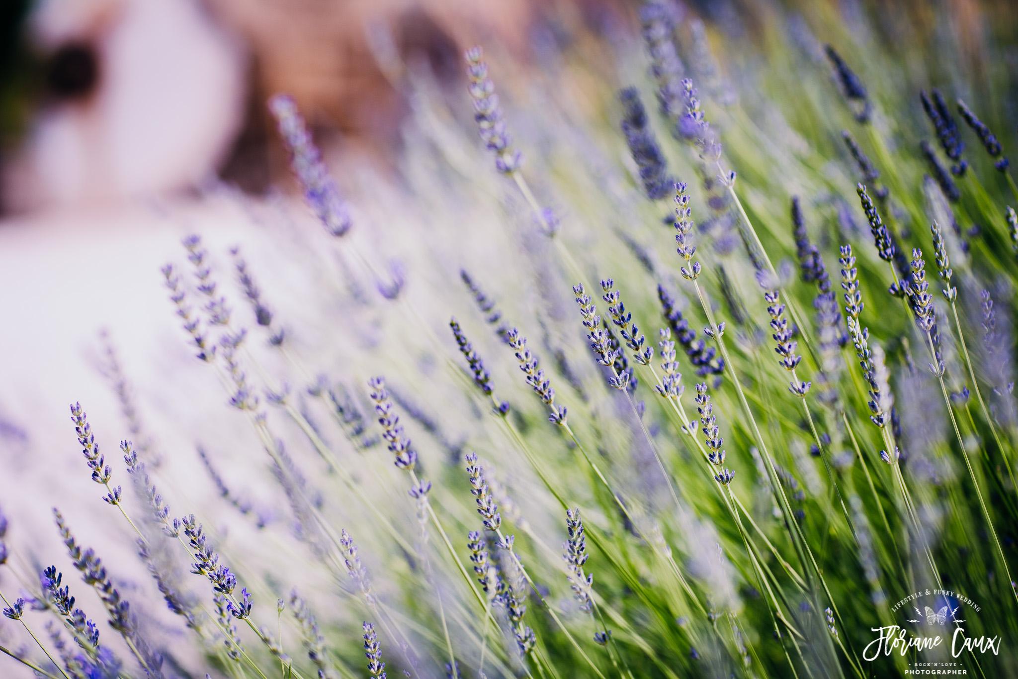 mariage-tropicool-avignon-domaine-blanche-fleur-8