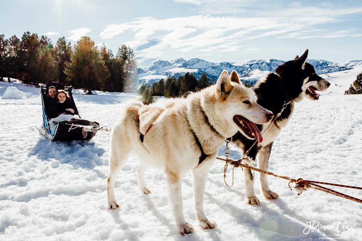 mariage chiens de traîneaux au plateau de beille ariège